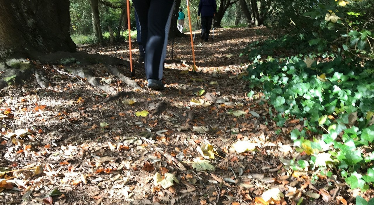 You are currently viewing Best posture while Nordic walking