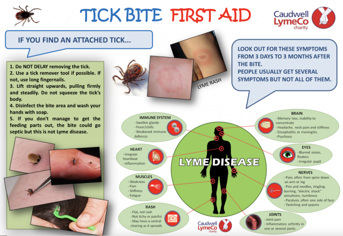 Tick bites and Lyme disease – what you should know
